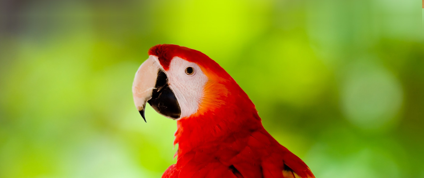 Wildlife Learning Center - Macaw
