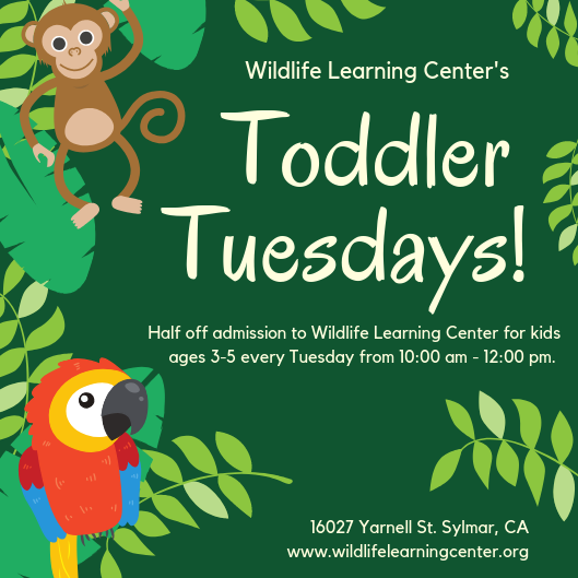 Toddler Tuesdays at Wildlife Learning Center